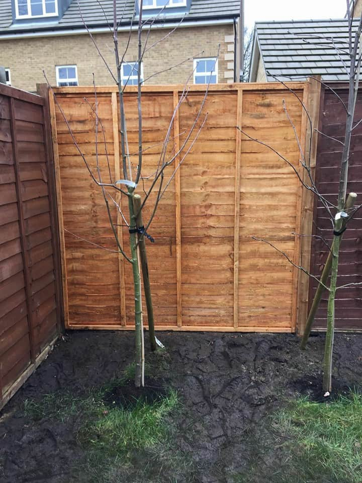 Replacement Fence Panel Job