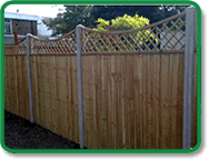 Trellis Fencing Accent Example